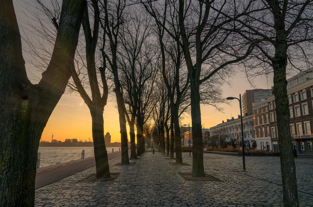 sun trough the trees by Lango77