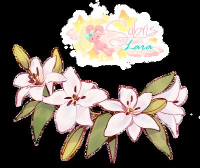 Png0044 Lilis Blancas by Sabris89