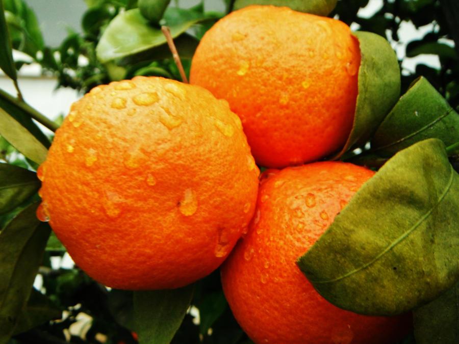 Tangerine rain by EvilOpal