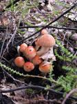 Mushroom family 1