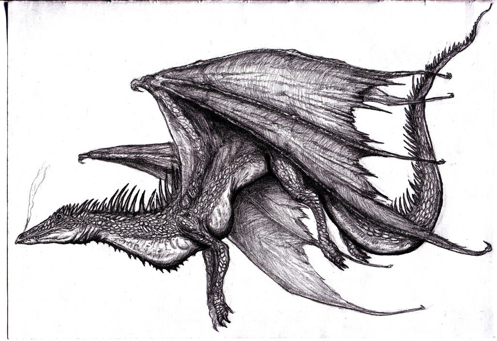 Winged Dragon I by KingOvRats