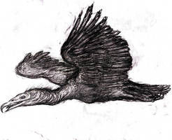 Roc, Rukh, Monstrous Bird by KingOvRats