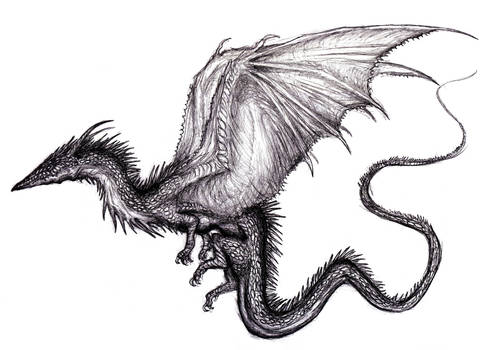 Winged Dragon XVII