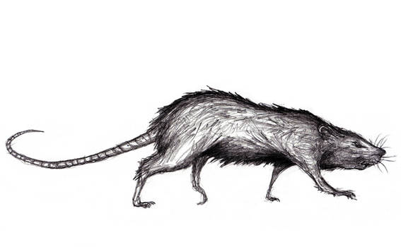 Monstrous Rat, Various