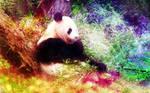 Panda Leisure