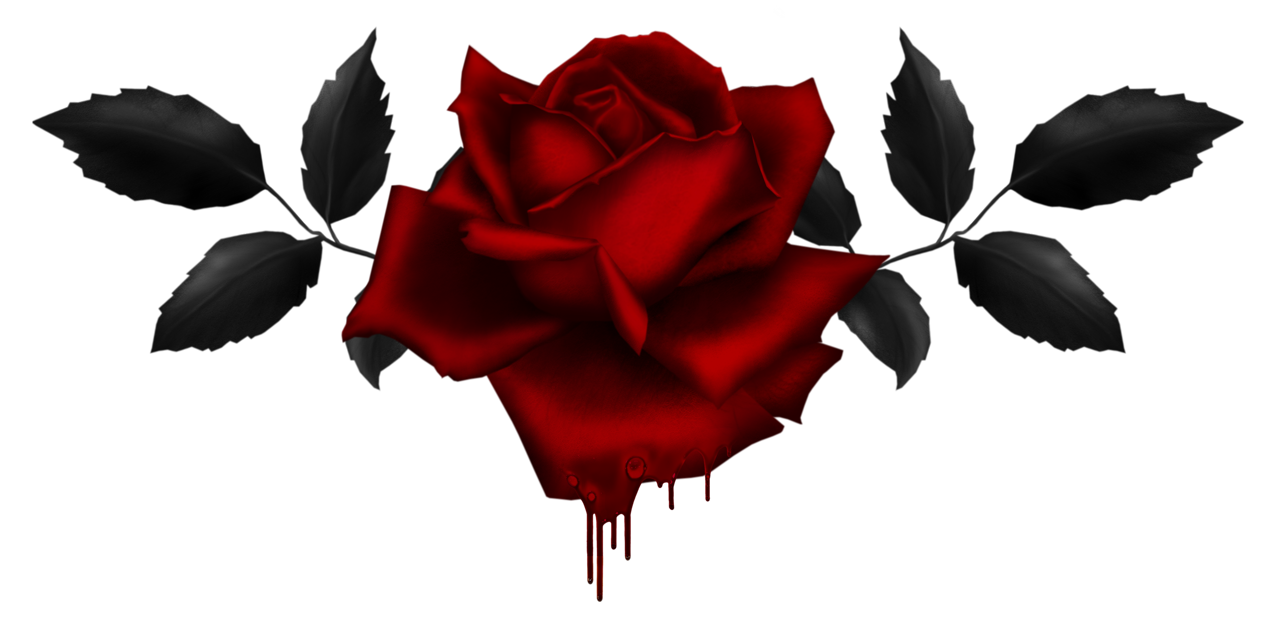 dongetrabi: Black Rose Drawing Bleeding Images