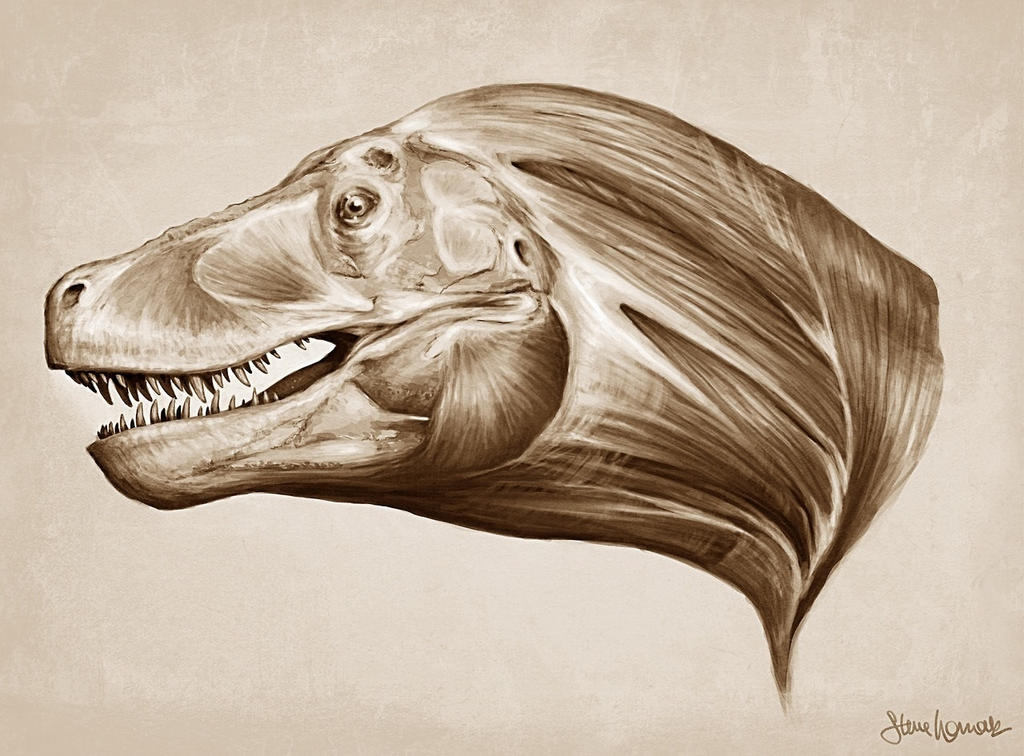 T-Rex head and neck muscle study by SBWomack on DeviantArt
