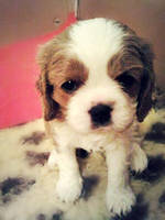 Puppy by Nobodies-nobody