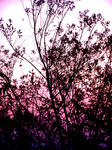 Pink And Violet Sky