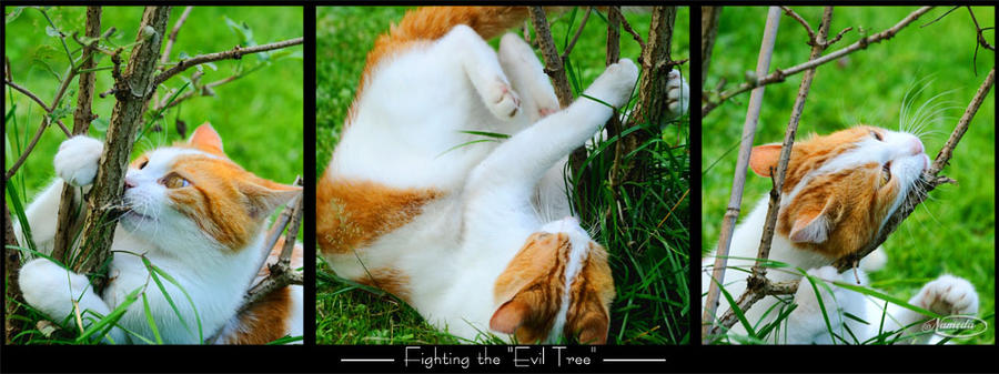 Fighting the evil tree by Nameda