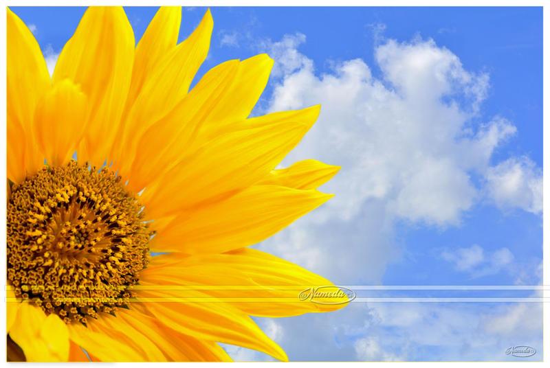 Summer Sun by Nameda
