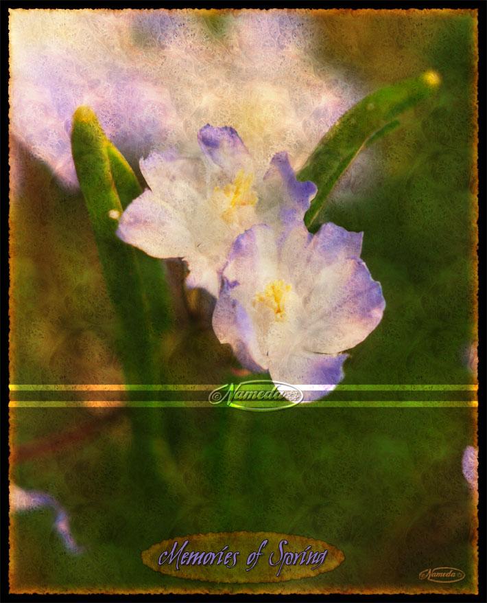 Memories of Spring by Nameda