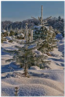 Christmastree to be by Nameda