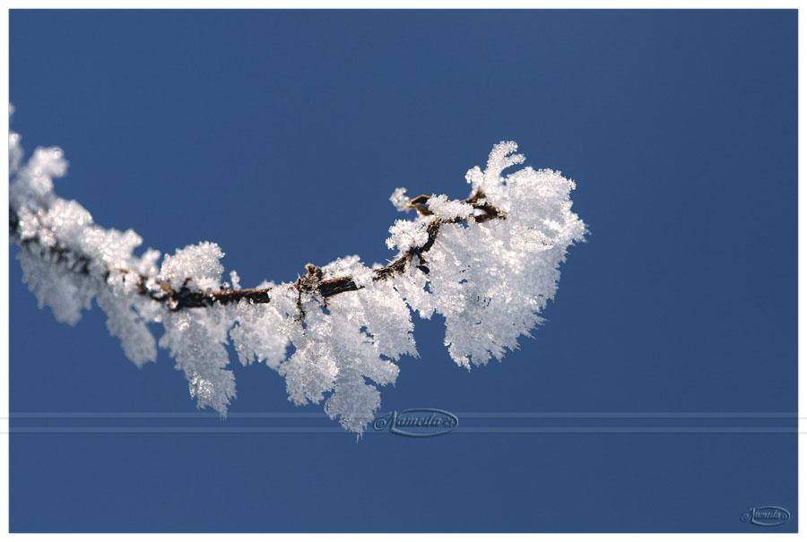 Frozen Beauty by Nameda