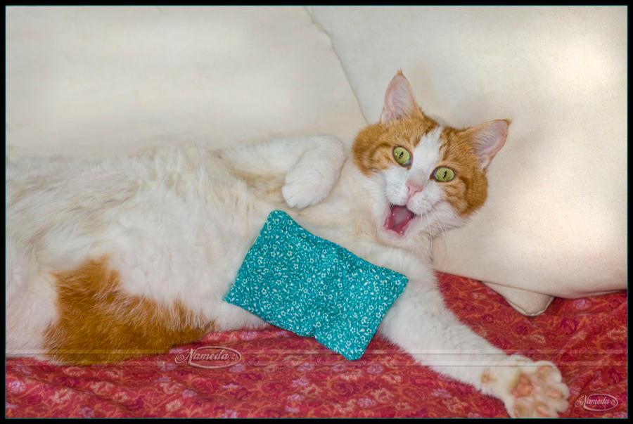 OMG or cat on dope by Nameda