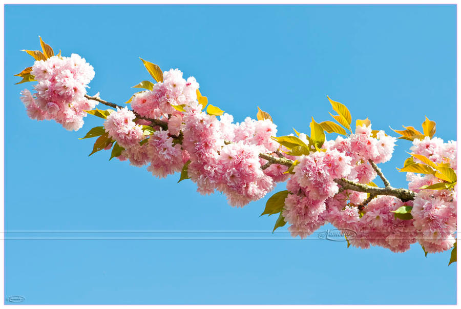 Spring is in the air by Nameda