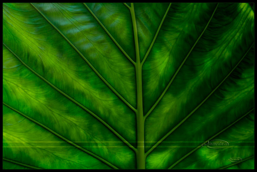 Illuminated green by Nameda