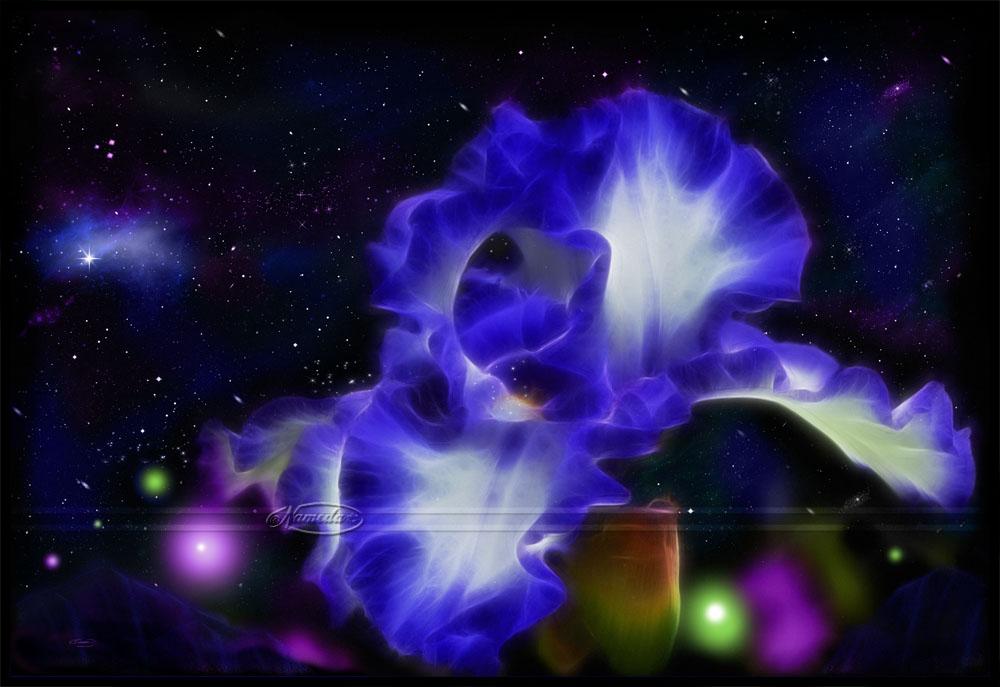 Bioluminescence by Nameda