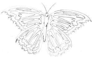 Butterfly by ShadowedWraith