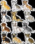 Corgi Puppies! [OPEN]