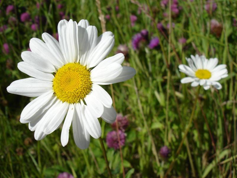 satisfied flower by Lappjo