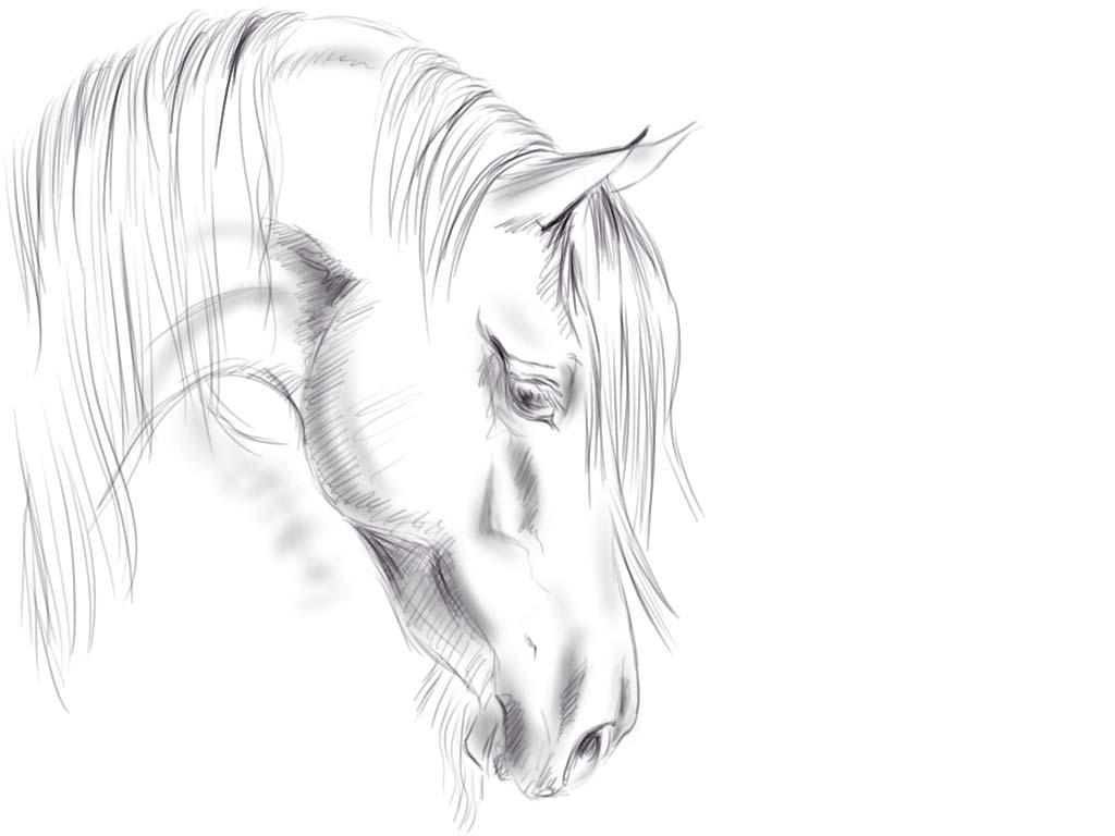Horse Head Sketch By Megal0mania On DeviantArt