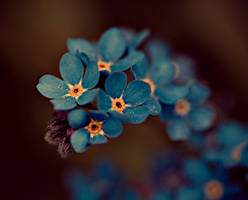Forget me Nots by gelatoallimon