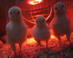 Hot chicks