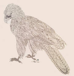 Eagle- Endangered Species Coloring Book Page