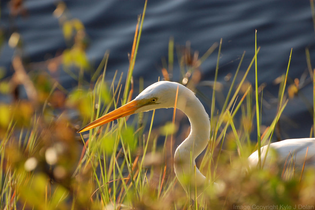 Bird in the Sun by Focus-Fire