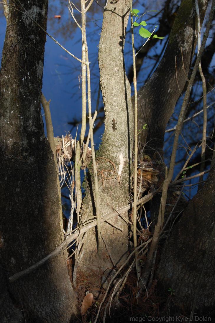 Lone Lizard by Focus-Fire