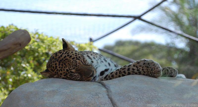 Sleeping Cat by Focus-Fire
