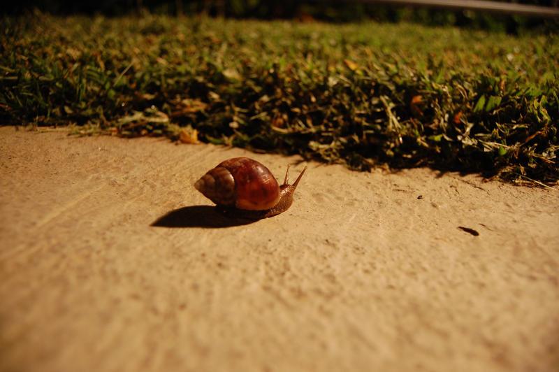Snail by Focus-Fire