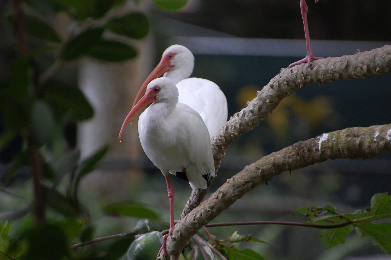 Birds by Focus-Fire