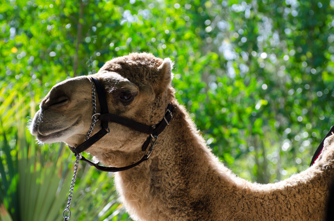 Mike Mike Mike! Guess what day it is?! by Focus-Fire