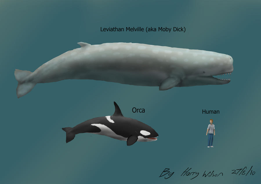 [Image: leviathan_melville_size_by_harry_the_fox-d2xca9j.jpg]