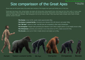 Great Ape Size Chart by Harry-the-Fox