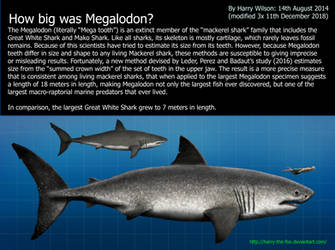 Megalodon Size by Harry-the-Fox