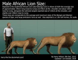 Male Lion Size by Harry-the-Fox