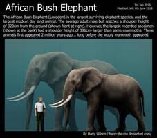 African Bush Elephant by Harry-the-Fox
