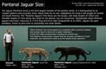 Jaguar Size