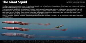 Giant Squid Size
