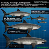 Megalodon Size Part 2 by Harry-the-Fox