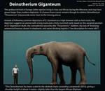 Deinotherium Giganteum Size