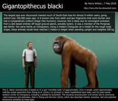 Gigantopithecus blacki size comparison by Harry-the-Fox