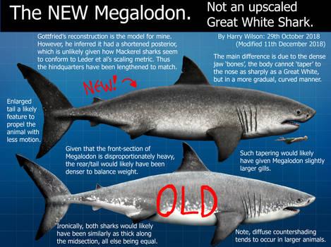 My NEW Megalodon