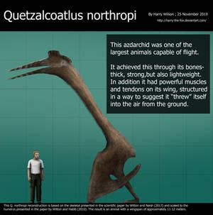 Quetzalcoatlus northropi size