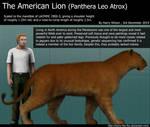 American Lion Size