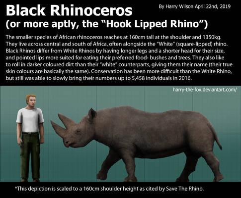 Black Rhinoceros size