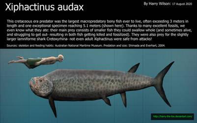 Xiphactinus audax Size